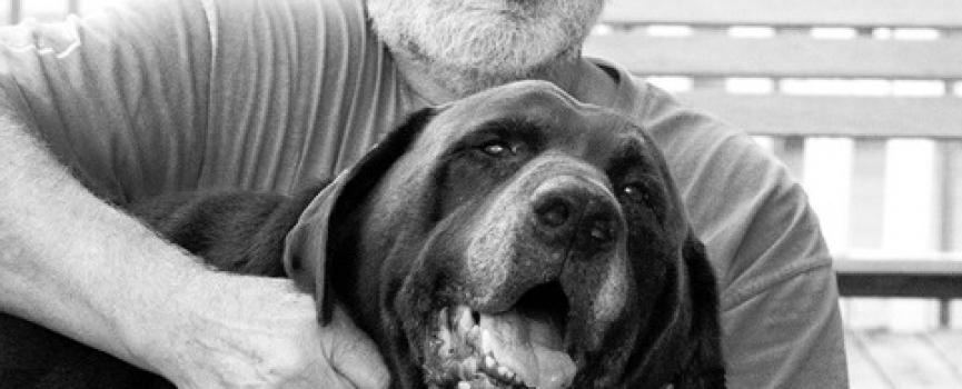Stokes Celebrates National Dog Day 2020